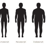 Three Main Body Types
