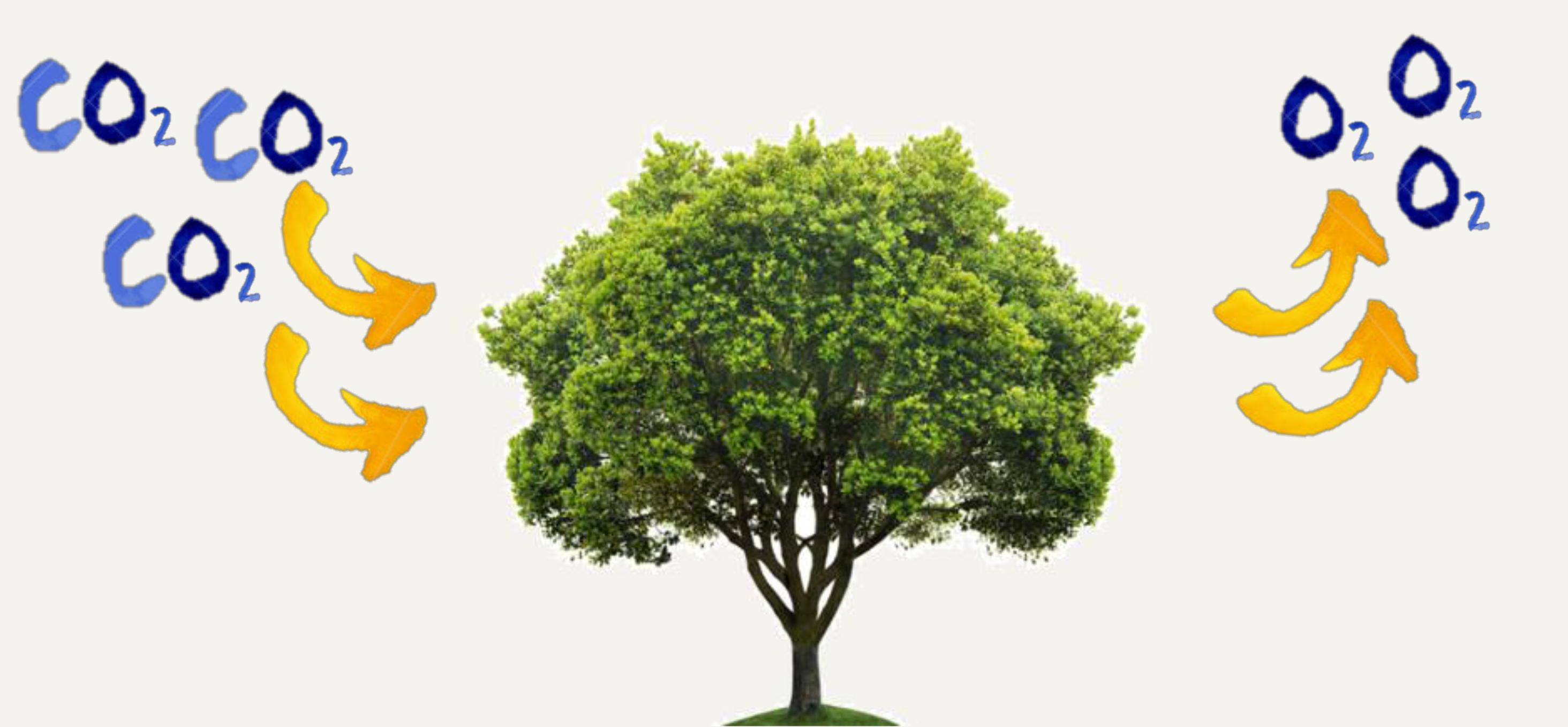 RIOX CO2 O2 Effect